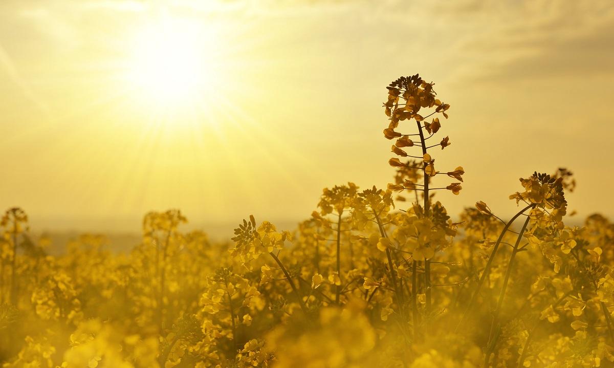 Sonne und Wiese