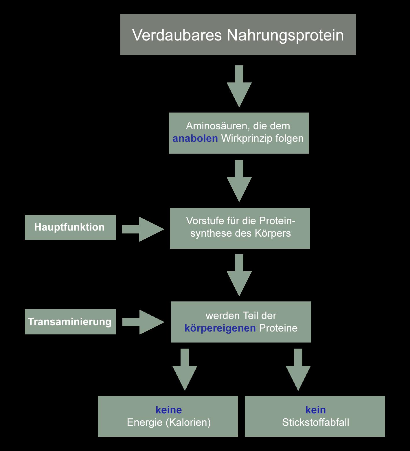 Verdaubares Nahrungsprotein